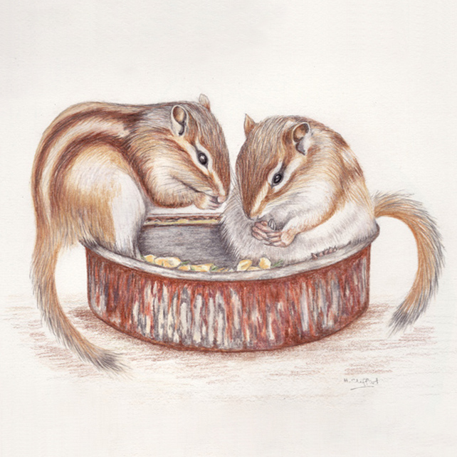 Chipmunk Breakfast - Original Coloured Pencil Drawing