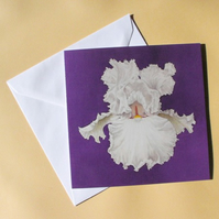 Greetings Card - Blank - White Iris