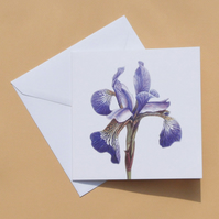 Greetings Card - Blank - Purple Iris