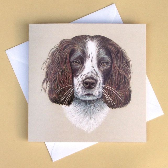 Greetings Card - Blank - Springer Spaniel Dog Portrait