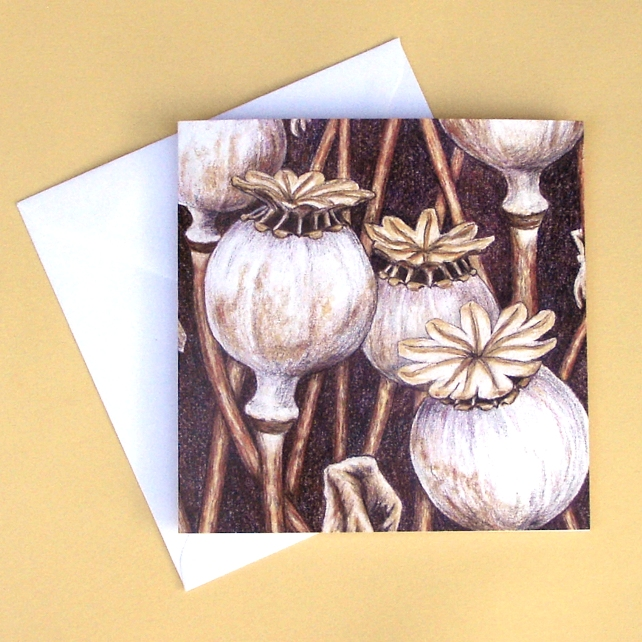 Greetings Card - Blank - Poppy Seed Heads