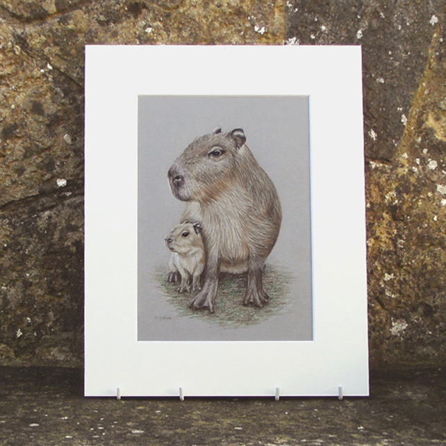 Capybara Original Coloured Pencil Drawing