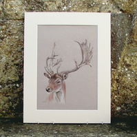Deer Stag Original Coloured Pencil Drawing