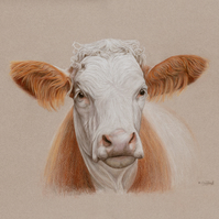 Cow Original Coloured Pencil Drawing
