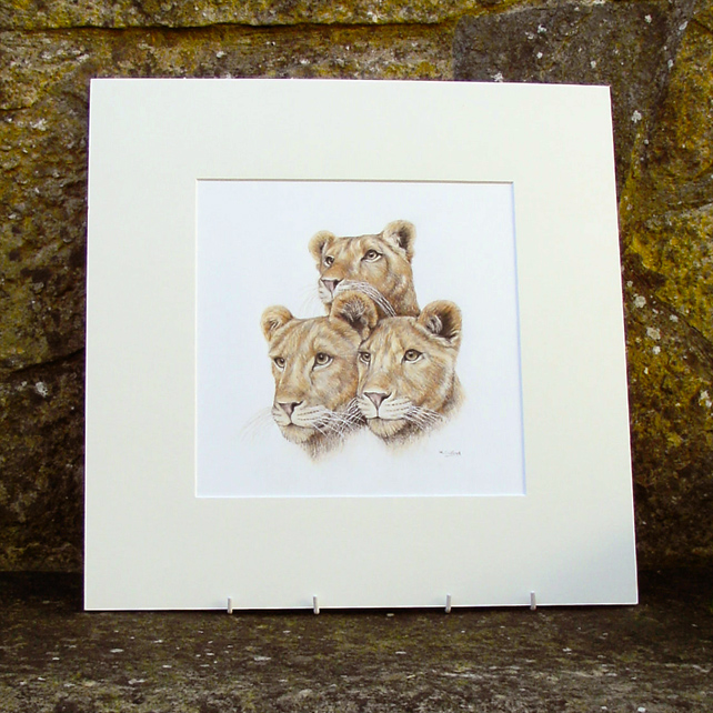 Lion Cubs Original Coloured Pencil Drawing