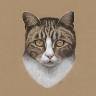 Tabby Cat Original Coloured Pencil Drawing