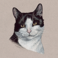 Black and White Cat Original Coloured Pencil Drawing