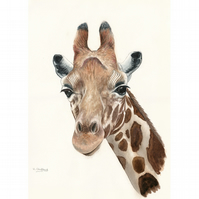 Giraffe Head Original Watercolour Painting