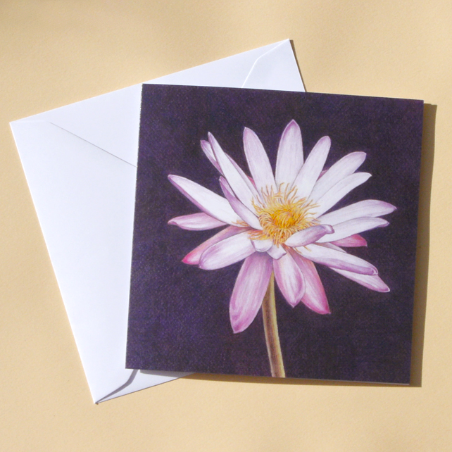 Greetings Card - Blank - Waterlily