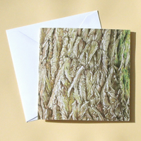Greetings Card - Blank - Willow Tree Bark