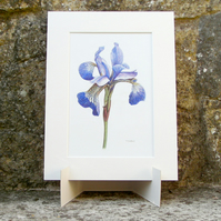 Purple Iris Flower Original Coloured Pencil Drawing