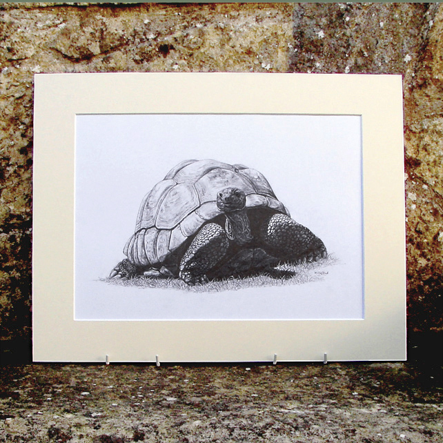Giant Tortoise Original Graphite Pencil Drawing
