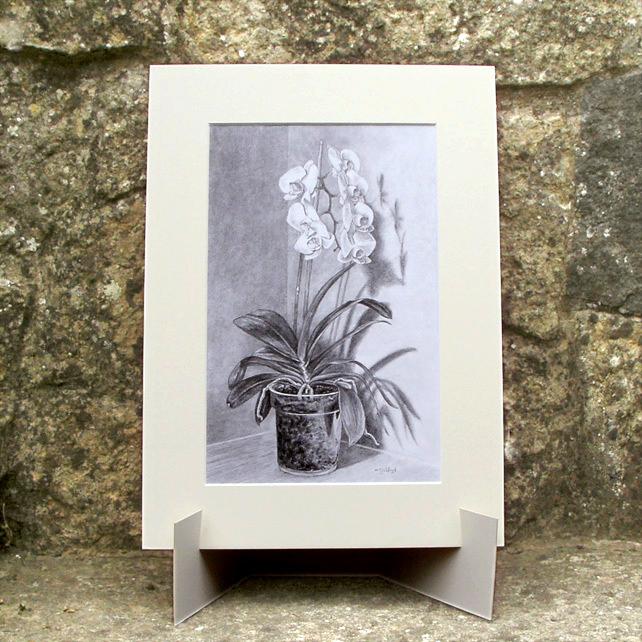 White Orchid Flower - Original Graphite Pencil Drawing