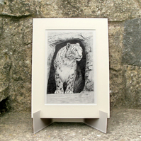 Snow Leopard in Cave - Original Graphite Pencil Drawing