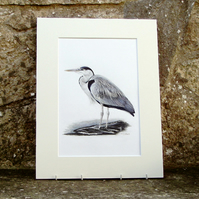 Heron Original Coloured Pencil Drawing