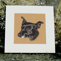 Little Black Dog Original Coloured Pencil Drawing