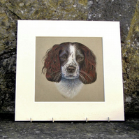 Springer Spaniel Dog Original Coloured Pencil Drawing
