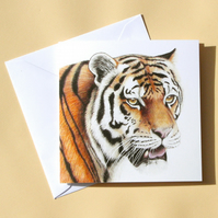 Greetings Card - Blank - Tiger Head
