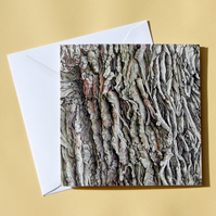 Greetings Card - Blank - Oak Tree Bark