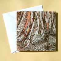 Greetings Card - Blank - Sweet Chestnut Tree Bark