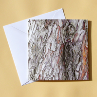 Greetings Card - Blank - Dawn Redwood Tree Bark