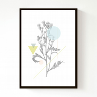 Creeping Thistle Geo A4 Print