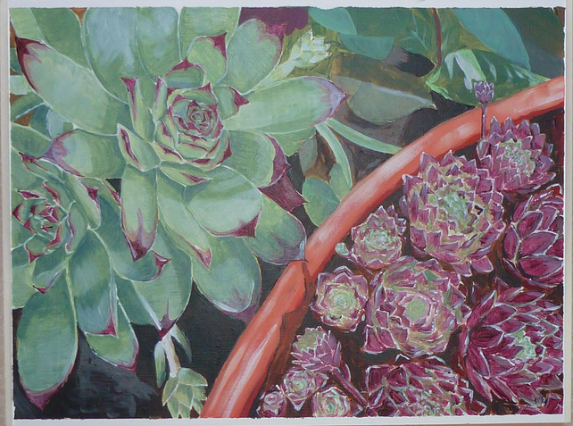 Original acrylic painting    Sempervivum