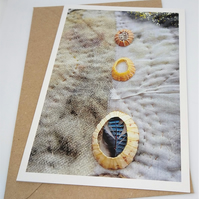 Limpet Shells Textile Collage Greetings Card
