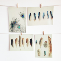 Feather Postcard Set, Nature Photography - Feather Collection