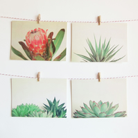 Set of Four Postcards - Botanicals