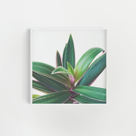 Plant Photography, Leaf Print  - Oyster Plant