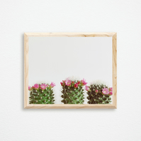 Cactus Print - Three Flowering Cacti