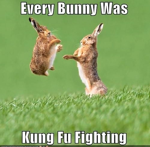 Bunny Kung Fu Magnet