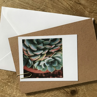 "Set of 5 mixed ""Polaroid"" style photo cards: plants and green fingers"