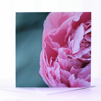 Graceful - A Blank Floral Greetings Card