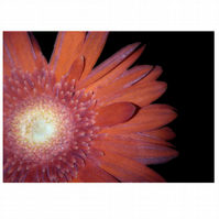 SALE Pack of flower postcards x10