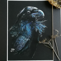 Handsome Raven original art work, quality print with mount 10 x 8 inch