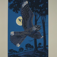 Summer Moondance - Nightjars