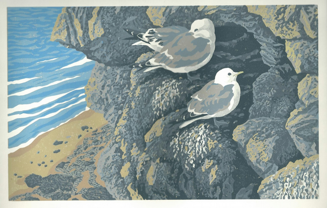 Kittiwakes at Braidcarr Point-Seahouses