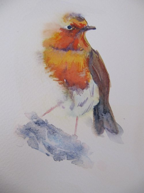 Watchful Robin aceo