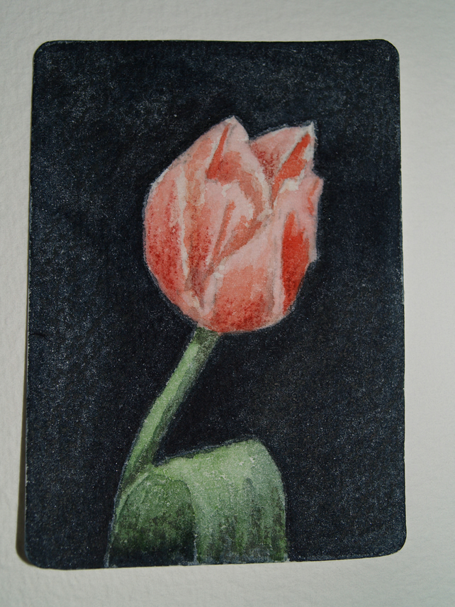 ACEO Original Watercolour Tulip