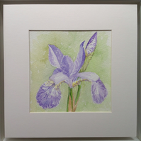 Original watercolour 'Iris' painting