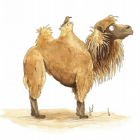 'Marvin the Camel I' Print Large