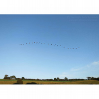 Geese Print 10 by 7 inches