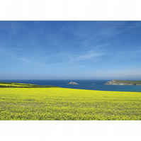 West Pentire Yellow Fields Print