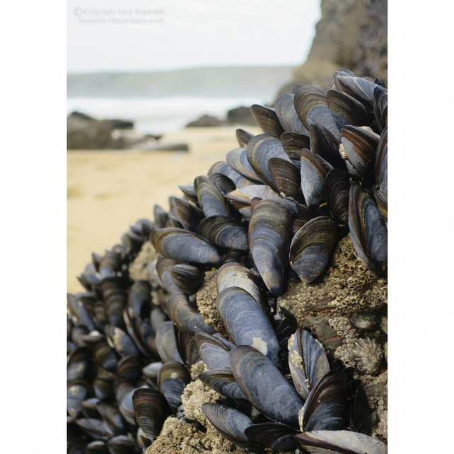 Mussels Notecards