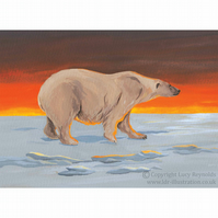 Polar Bear Print 10 by 7 inches