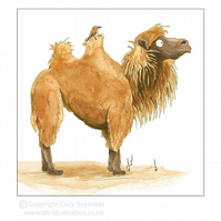 Marvin the Camel Card