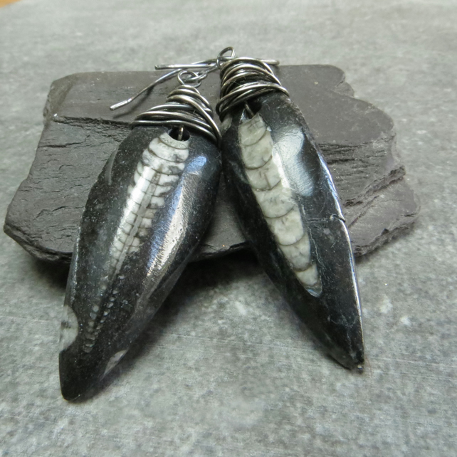 Orthoceras spine and silver wire wrap earrings, Fossil jewellery