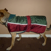 Dog coat, waterproof bespoke large- suitable for staffy, slim labs etc